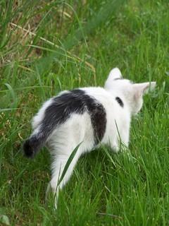 FOTKA - kotě 1