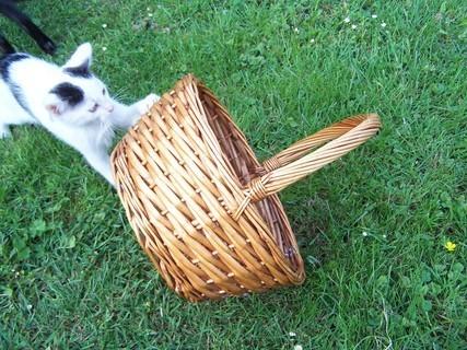 FOTKA - kotě