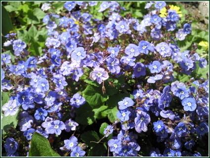 FOTKA - Modré kvítky