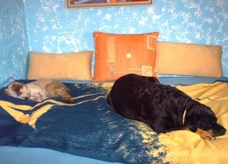 FOTKA - Polední siesta - 15.5.2009 , a ja jsem na  počitači.