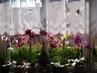 moje orchideje