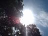 Po bouřce vždy svítí slunce... - rano 27.5.2009.