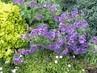 Jarní modré kvítí