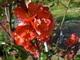 červenáááááá