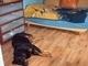 Aisha - vitěz boje o postel !  - 20.5.2009