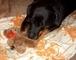 Rottweilerka Roxy s  novou hráčkou - 26.5.2009