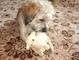 Aisha  s ovečkou- 26.5.2009