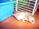 naše nový zvířátko-křeček