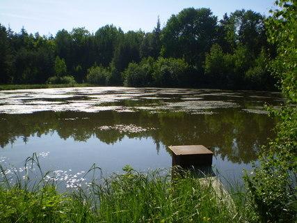 FOTKA - Lesní rybníček