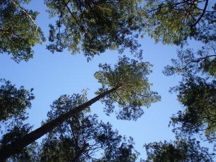 FOTKA - Pohled nahoru