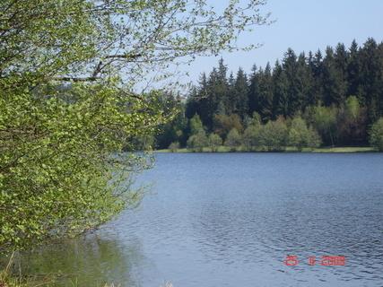 FOTKA - rybník