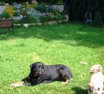 FOTKA - Roxy  na záhradě- 20.5.2009