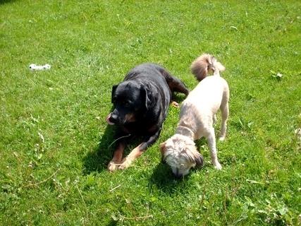 FOTKA - Roxy  a Aisha - 20.5.2009