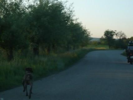 FOTKA - motorka před námi - z pole vyběhl pes