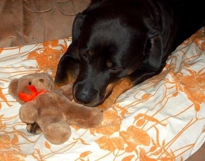 FOTKA - Rottweilerka Roxy s  novou hráčkou - 26.5.2009