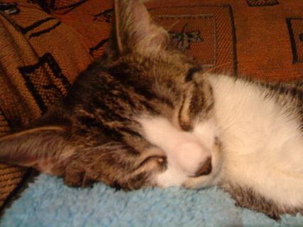 FOTKA - To krásně spím