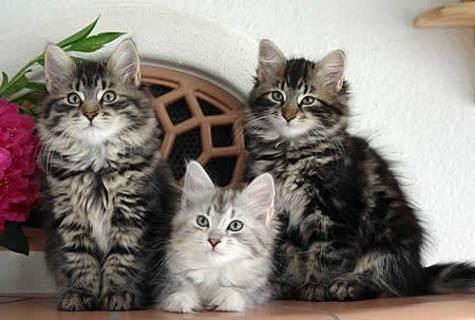 FOTKA - Naše kotata