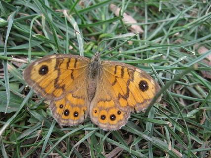 FOTKA - motýlek