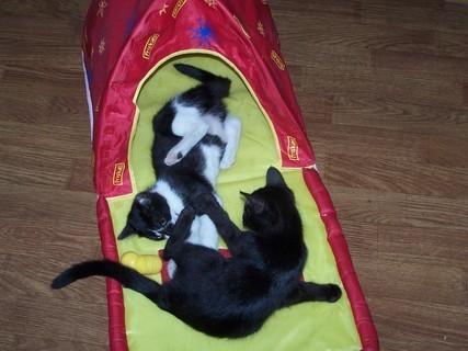 FOTKA - Kočkování v domečku