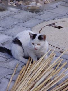 FOTKA - Spokojené koťátko u nových páníčků
