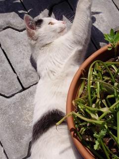 FOTKA - kotě*