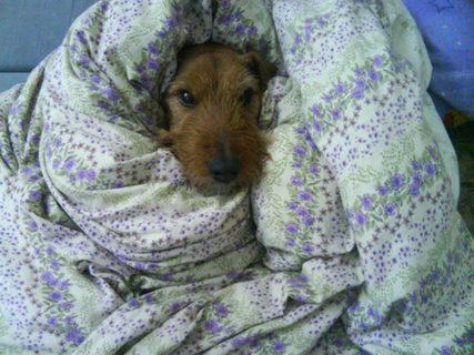 FOTKA - pes v peřinách