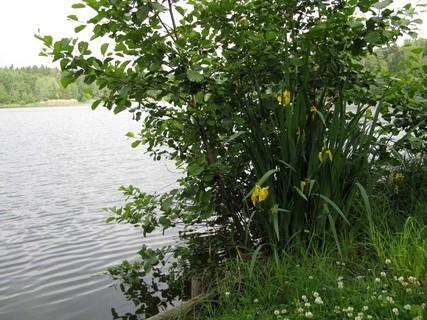 FOTKA - Na břehu rybníka