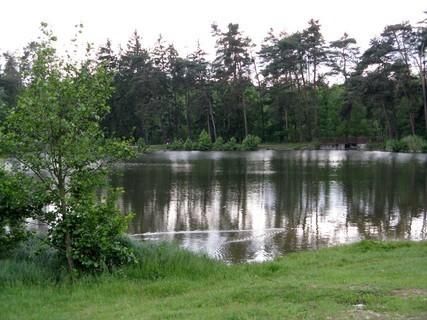 FOTKA - Borovice u rybníka