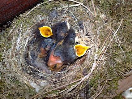 FOTKA - pt��ci