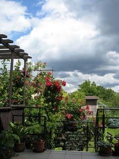 FOTKA - obloha nad zahrádkou