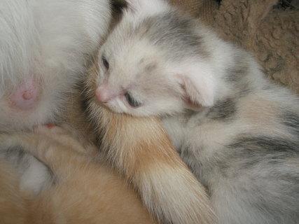FOTKA - mačiatka