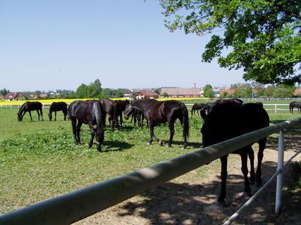 FOTKA - Koně ve Slatiňanech