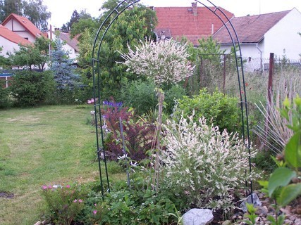 FOTKA - Zahrada v květnu