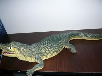 FOTKA - krokodýl