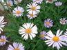 kytky,