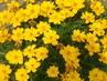 drobné květinky