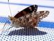 motýl na lehátku