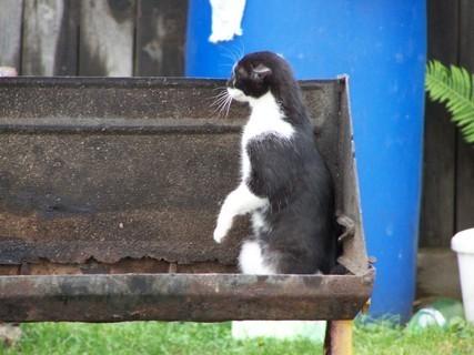 FOTKA - Kotě v grilu