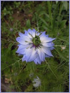 FOTKA - Zvláštní rostlina - květ
