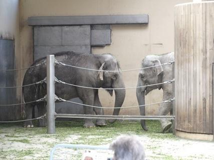 FOTKA - sloni-ostravská ZOO