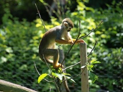 FOTKA - opička- ZOO lešná