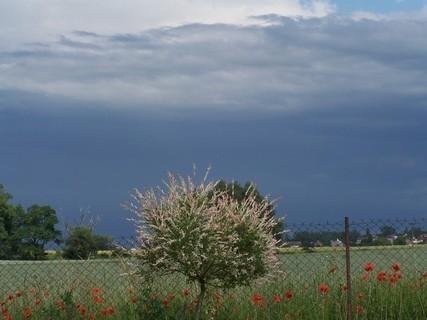 FOTKA - Nebe před deštěm