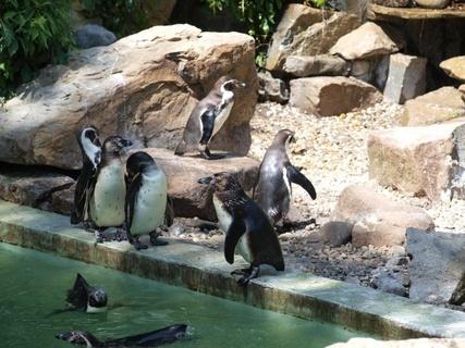 FOTKA - Zoo Lešná- tučnáci