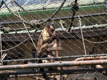 FOTKA - opička - zoo lešná