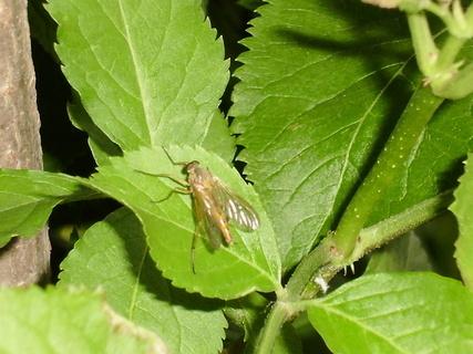 FOTKA - hmyz