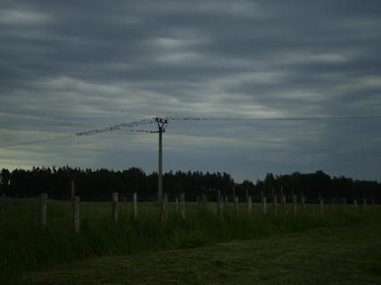 FOTKA - U lesa