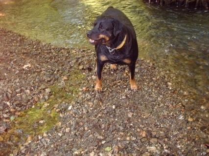FOTKA - Roxy na břehu potoka, 14.6.2009