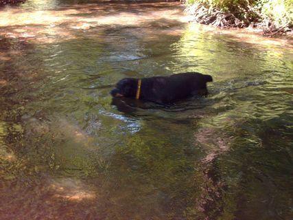 FOTKA - Roxy se chladí v potoce, 14.6.2009
