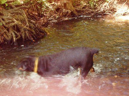 FOTKA - Roxy se prohání v potoce , 14.6.2009