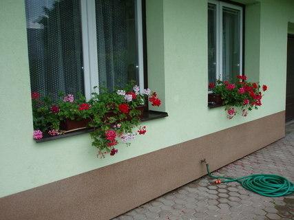 FOTKA - muškáty kvetou